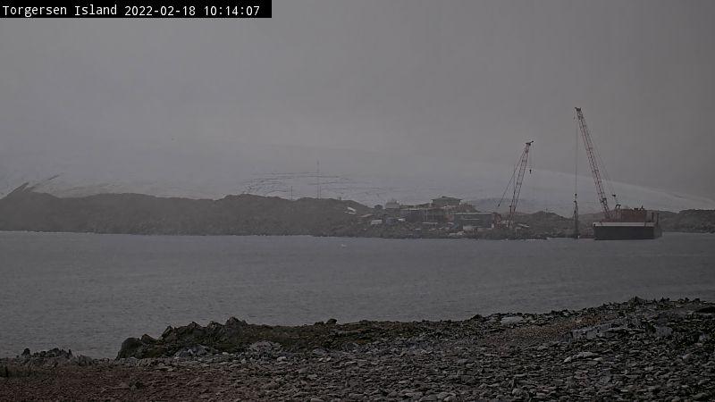Torgersen Island Penguin Cam