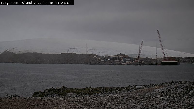 The Torgersen Island Penguin Camera