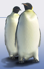 image of two penguins standing together