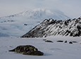 50 Years Of Weddell Seals