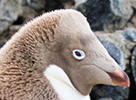 Meet The Penguin Misfits