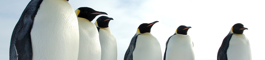 U.S. Antarctic Program - Online Learning Center Section